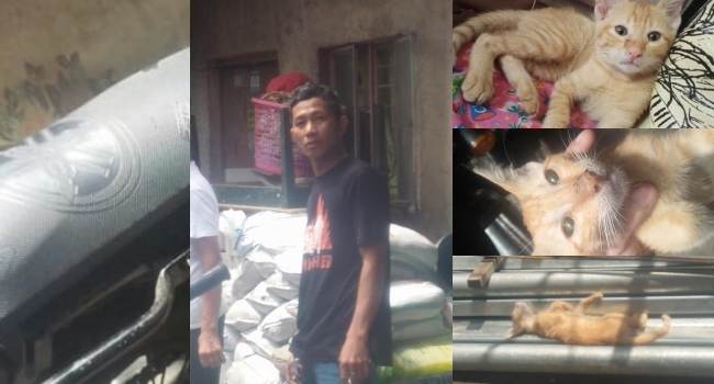 Rider Brutally Kills Cat Because It Sat On His Motorcycle
