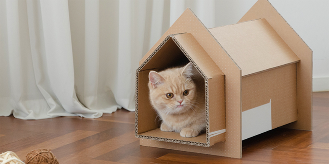 Samsung introduced its Eco-Package initiative that can turn cardboard boxes into useful items.